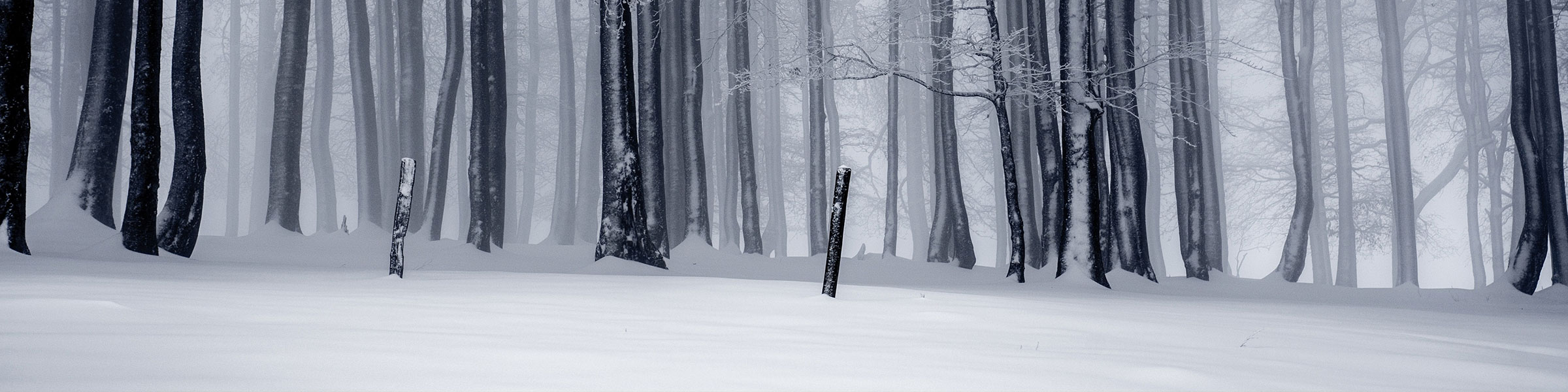 Winter Forest Header